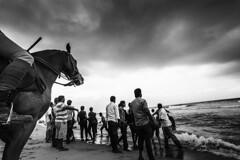 Trojan (ayashok photography) Tags: horse india marina asian blackwhite nikon asia god indian madras police desi trojan marinabeach hindu chennai hinduism bnw bharat bharath desh barat barath blackwhtie ganeshachaturthi ganeshvisarjan 2013 ayashok nikond700 tamilnadupolice tokina1735mm ayashokphotography ganeshchuturthi costalgaurd ayp2367