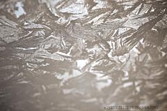 windowfrostDSC01886 - Version 2 (Debbie Prediger Photography) Tags: winter canada cold window snowflakes frost artistic patterns tripod textures alberta closeups cadogan ©debbieprediger