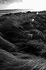 RosslareDonnieD copyR (kenheney) Tags: ocean barcelona show seattle street city uk trip travel blue trees winter light sunset red sea summer portrait england sky people urban blackandwhite bw woman usa dog baby sun india white lake snow black color macro tree green bird art love beach nature water girl birds animals architecture night clouds river square de landscape island photography graffiti la photo dance spring concert spain nikon europe raw day photos live band iphone instagramapp