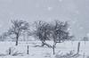 Au Fil des Tempêtes (Sous l'Oeil de Sylvie) Tags: trees winter snow cold nature rural landscape pentax hiver january arbres québec neige paysage campagne janvier froid beauce croche tordu herbes cloture k30 ruralité 70200mmsigma sousloeildesylvie sttéophile