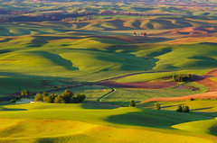 Steptoe Butte Early Morning Scene (CraigGoodwin2) Tags: wheat palouse easternwashington drylandfarming steptoebutte inlandnorthwest steptoebuttestatepark