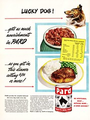 """""""Lucky Dog!"""" (saltycotton) Tags: life dog pets vintage magazine collie ad mashedpotatoes advertisement dogfood 1940s steak peas 1949 swifts pard cannedgoods"""
