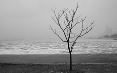 Chicago, 2014 (gregorywass) Tags: winter lake snow chicago tree ice harbor frozen 2014 treesubject