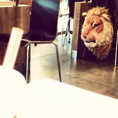 #lion (bezz123) Tags: depaul imissu instagram ifttt guthai