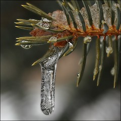 Another Wintry Cold Day...But It's March Break? (Sue90ca Busy Summer...Slow @ Flick*ring) Tags: snow cold ice canon march drops break windy dreary 28 60mm icicles dull wintry 60d imtotallyfedup challengeclubwinner