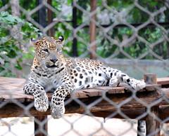 mysore zoo 9