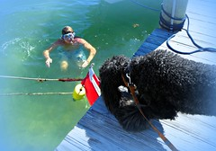 What kind of Life Form is This?? (Midnight and me) Tags: boy water sunshine dock poodle midnight curiosity floridakeys facemask standardpoodle blackstandardpoodle aboyandadog midnightandme curiousmidnight thelittledoglaughedtellstoriesplease