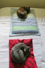 Gracie and Millie 21 April 2014 0027Rif 4x6 (edgarandron - Busy!) Tags: cats cute cat gracie feline tabby kitty kitties tabbies millie graytabby patchedtabby