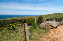 Along the Fence Line (Jocey K) Tags: sea newzealand sky green clouds landscape weeds scene pacificocean southisland catlins southland tripdownsouth