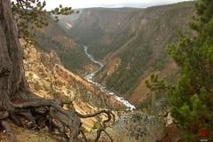Grand Canyon of the Yellowstone River (Mark Kaletka) Tags: inspiration river scenic canyon yellowstonenationalpark yellowstone overlook