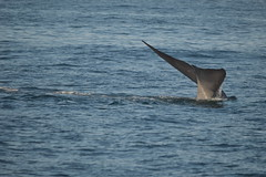 Dolpins and Whales (dupontreece) Tags: ocean sea sealife longbeach whales dolpins