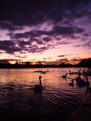 Sunset & Swans (Cris Ward) Tags: park trees sunset shadow sky orange cloud lake color colour london water silhouette night evening colorful warm purple artistic dusk wide lofi violet vivid wideangle olympus filter hydepark colourful 15mm serpentine mirrorless colorcreator microfourthirds bodycaplens bcl1580 olympusomdem10