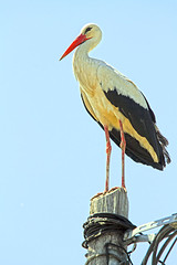 """klapperstorch • <a style=""""font-size:0.8em;"""" href=""""http://www.flickr.com/photos/137809870@N02/26621826633/"""" target=""""_blank"""">View on Flickr</a>"""