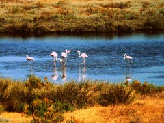 Punta del Moral. Ayamonte (Huelva) (Angela Garcia C) Tags: hidrologa vegetacin huelva geografafsica relieve orografa avifauna biogeografa puntadelmoral ayamonte