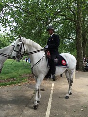 Police Horse at Hyde Park Corner (Ian Press Photography) Tags: park horses horse london corner police hyde mounted service met emergency metropolitan officer services 999 officers