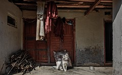SOCIAL DOCUMENTARY PHOTOGRAPHY - NEPAL, ONE YEAR AFTER THE EARTHQUAKE (SUNA_PHOTOGRAPHY) Tags: nepal dog colour photojournalism socialdocumentary sarangkot earthquak