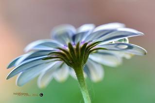 Fleurs er goutte d'eau