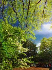 April Day IMG_1087 (ForestPath) Tags: ohio usa sun home clouds spring backyard cincinnati april hss stormyskyandsunshine elmtreebrancheshangingdown dogwoodtreeblooming typicalaprildayforhere