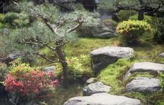 (Mii Yatogi) Tags: flower film japan garden kyoto