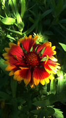 93 (jurinkof) Tags: fleurs blten   kvety kvty