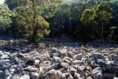 20160627-19-Scree field on Wellington Falls track (Roger T Wong) Tags: outdoors rocks walk australia hike scree tasmania hobart mtwellington bushwalk tramp 2016 wellingtonpark dolerite disappearingtarn sony2470 rogertwong sel2470z sonyfe2470mmf4zaosscarlzeissvariotessart sonya7ii sonyilce7m2 sonyalpha7ii
