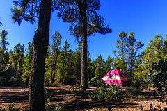 Cow Mountain Recreation Area (blmcalifornia) Tags: recreation outdoors nature getoutdoors getoutside california trails terrain rugged wildlife mountains trees ohv offhighwayvehicle travel habitat