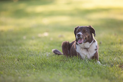 Lucy II (michaelraleigh) Tags: dog green minnesota canon secluded infocus 200mm highquality f28l