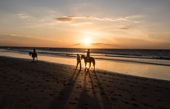 Entardecer (felipe sahd) Tags: sunset praia beach brasil pessoas jericoacoara prdosol cear cavalos oceanoatlntico entardecer
