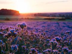 In a warm light (Radek Fluder) Tags: light sunset landscape violet polska