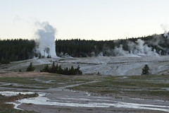 Lion geyser, Yellowstone (David A's Photos) Tags: june lion yellowstonenationalpark yellowstone geyser yellowstonetrip ugb uppergeyserbasin june2016