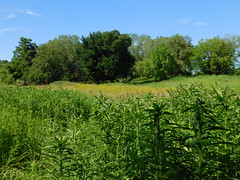DSCN1525 (mjbarz) Tags: summer nature illinois hike trail westdundee carpentersville 2016 racewaywoods