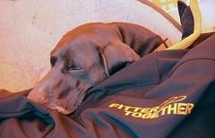 (orbit9000) Tags: dog hund dogfest