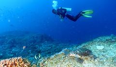 Turtle on Bali Dive (Corey Hamilton) Tags: bali underwater turtle scubadiving nusapenida