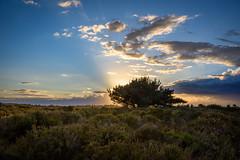 The setting Sun (Nick_Rowland) Tags: uk sunset sky clouds coast suffolk heather eastanglia sizewell dunwichheath