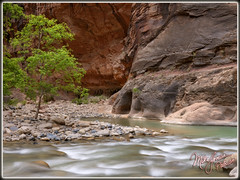 The Narrows! (MikeJonesPhoto) Tags: zion narrows 616 the 7856