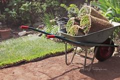 Lawn rolls (Elisa Severi) Tags: verde green garden lawn roll rolls prato wheelbarrow gardener giardino giardiniere rotoli cariola rotolo