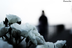 l'anima leggera andare  andare via lontano e oltre dove immaginare Ti è mai successo? (hanabeldirà [anna dirà]) Tags: anima immaginare negrita oltre leggera tièmaisuccesso andarevialontano