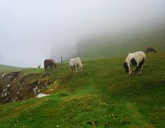 Pascoli a Nord (Wrinzo) Tags: uk horse cliff grass island islands scotland cliffs cavallo shetland isola scogliere foula scozia isole prateria