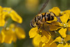 Walking On Sunshine (Djenzen) Tags: canon bug garden insect jeroen tuin jansen 40d