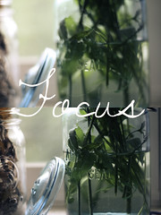 Focus (i.am.KPhotography.) Tags: flowers canon poster typography photography focus diptych masonjar rebelxsi
