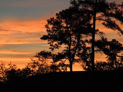 Sunday Sunset (maorlando God kept us 2012 leaning on Him 2013) Tags: sunset sky usa clouds texas silhouettes pinetrees easttexas diamondclassphotographer flickrdiamond texasscenes sunrisesunsetsong