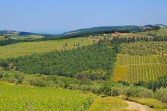 20130617_Toscane_A0099 dans [ on explore # 108 on July 10, 2013] (Napafloma-Photographe) Tags: italy landscape vacances vines holidays italia explore tuscany chianti toscane vignes italie vacanza 2013 landscapeoftuscany paysagetoscan routeduchianti