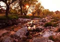 Peace River (Rus) Tags: ireland quiet sundown wicklow riverliffey sigma1020 coronationplantation nikond5000