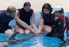 Exam (DKivlin) Tags: swim canon jay howard malta victoria dolphins kivlin eos7d