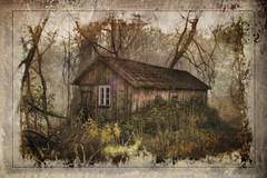 In the middle of the forest was a small hut ..... (Bessula) Tags: old tree texture forest cottage manipulation hut creation bushes scrub ruby3 bessula bestcapturesaoi magicunicornverybest magicunicornmasterpiece