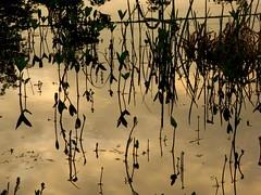 IMG_5221 b (Traud) Tags: reflection pool silhouette germany bayern deutschland bavaria abend sonnenuntergang teich spiegelung laufen feuchtbiotop
