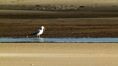 20131113_Ainsdale_0036 Fishing (paul_h2525) Tags: ainsdale