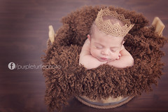 Baby A - Perth Newborn Baby Photographer (mrsm_jones) Tags: portrait baby cute girl studio photography jones perfect child purple sweet turtle michelle adorable australia perth tiny newborn western wa hopwood