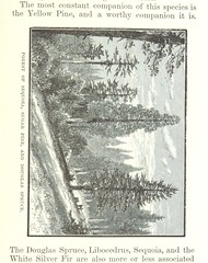Image taken from page 179 of 'The Mountains of California. [Illustrated.]' (The British Library) Tags: bldigital date1894 pubplacenewyork publicdomain sysnum002579019 muirjohnexplorer medium vol0 page179 sherlocknet:tag=fort sherlocknet:tag=seigneur sherlocknet:tag=vegetate sherlocknet:tag=tree sherlocknet:tag=frost sherlocknet:tag=france sherlocknet:tag=ques sherlocknet:tag=side sherlocknet:tag=rang sherlocknet:tag=place sherlocknet:tag=climate sherlocknet:tag=milieu sherlocknet:tag=interest sherlocknet:tag=form sherlocknet:tag=ford sherlocknet:tag=petite sherlocknet:tag=zone sherlocknet:category=landscapes sequoia sugarpine pseudotsugamenziesii douglasfir rotatecc