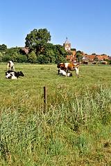 Pilsum (Gentle***Giant) Tags: cows khe kreuzkirche pilsum variosonnarf480200